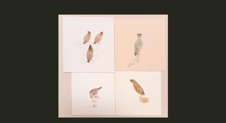 Pájaros varios 3 - acuarela (2002) Serie ANIMALES Acuarela, Gouache y lápiz sobre papel.